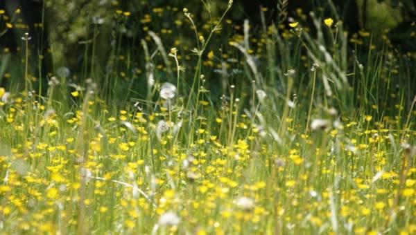 Domowe sposoby na alergię. 25 porad dla alergików!