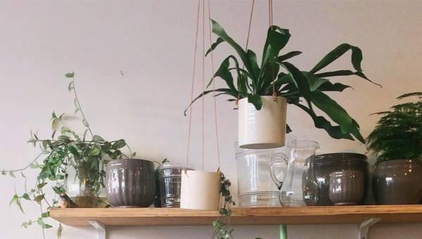 Trujące rośliny doniczkowe: które gatunki ustawiać poza zasięgiem dzieci i zwierząt?
