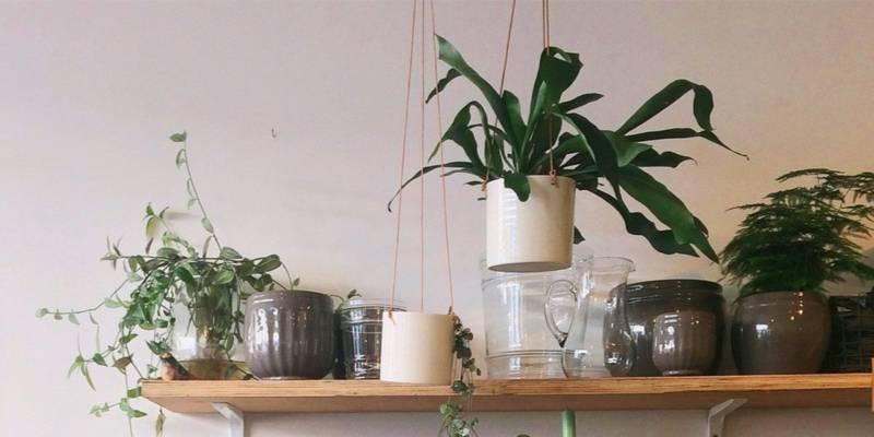 Trujące rośliny doniczkowe