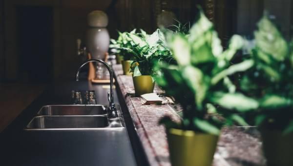 7 sposobów na czyszczenie roślin doniczkowych