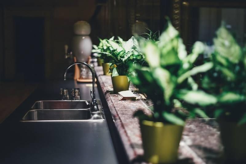 Oto 7 sposobów na czyszczenie roślin doniczkowych