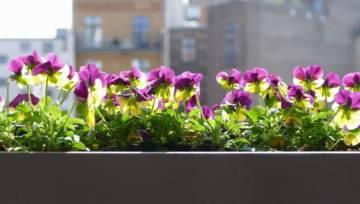 Balkon na wiosnę. Jakie kwiaty posadzić?
