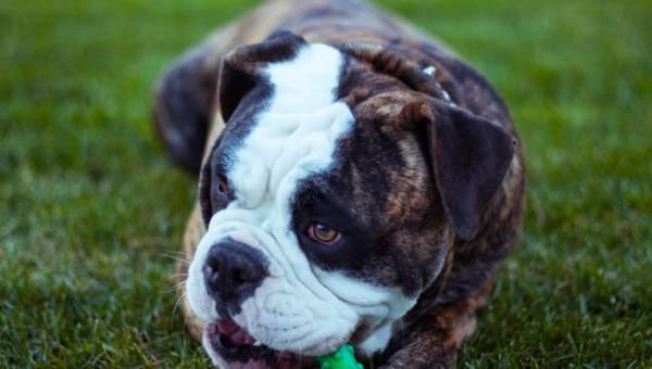 Wybieramy zabawki dla psa – na co zwrócić uwagę?