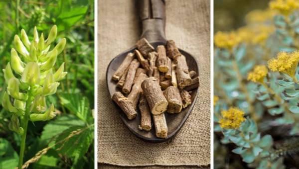Adaptogeny – zioła zwalczające stres i zwiększające odporność