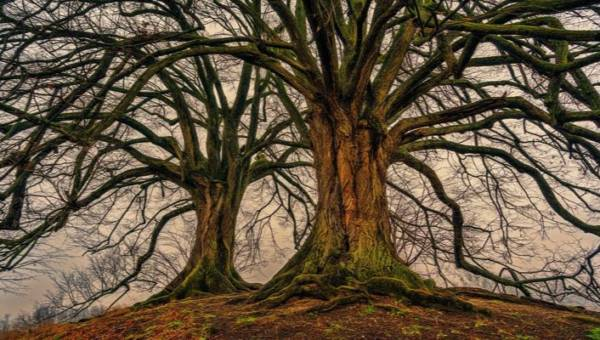 Jakim drzewem jesteś? Pradawny horoskop celtycki!