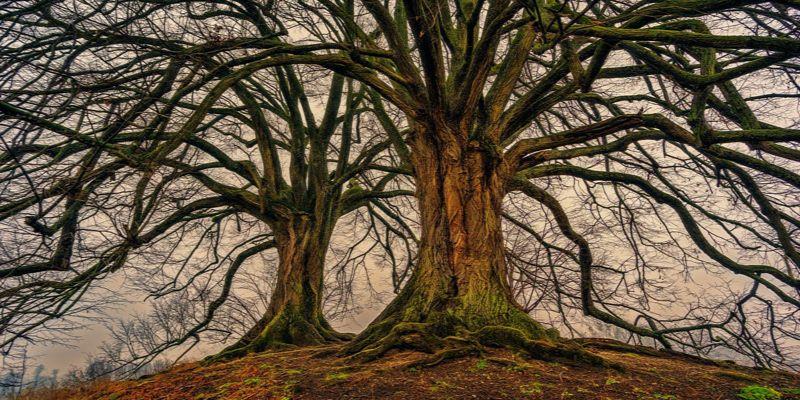 jakim drzewem jesteś