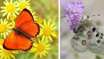 Najpiękniejsze motyle w Polsce – sprawdź, jakie okazy możesz spotkać latem!