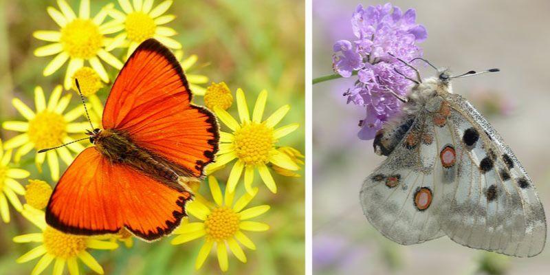 najpiękniejsze motyle w Polsce