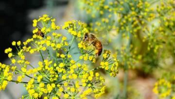 Domowe sposoby na ukąszenia owadów. 4 skuteczne specyfiki DIY