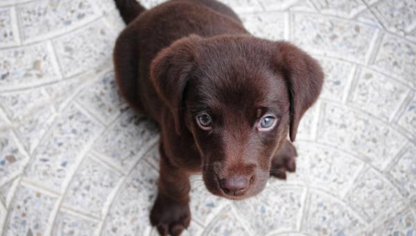 Karma dla psa i dla szczeniaka – garść porad