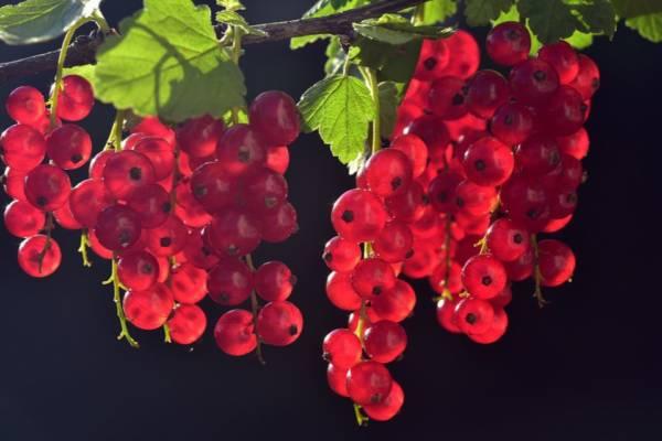 owocowe maseczki