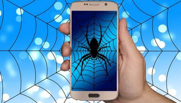 Jak się pozbyć pająków w domu – naturalne sposoby