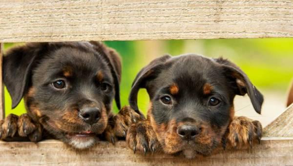 Jak zadbać o psią dietę?