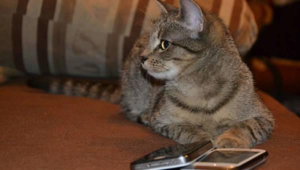 Jak odchudzić kota? Jaką karmę dla kota wybrać?
