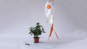 Kroplówka dla kwiatów doniczkowych – niezwykły projekt Keity Augustkalne