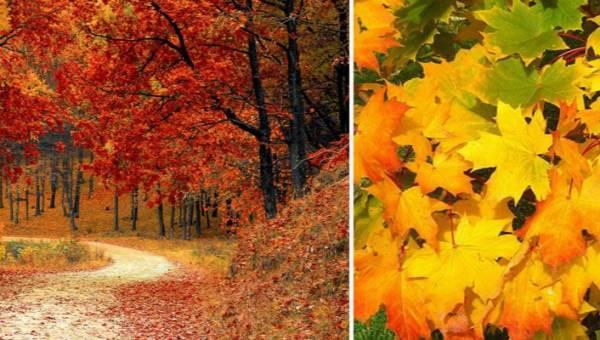 Co zrobić z jesiennych liści? Koniecznie przynieś je ze spaceru!
