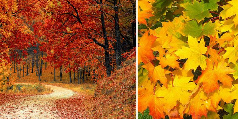 co zrobić z jesiennych liści
