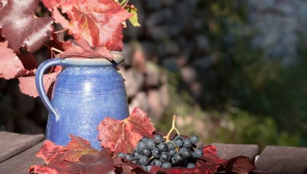 Poznaj wina wegańskie. Powstały w zgodzie z ideologią wegan