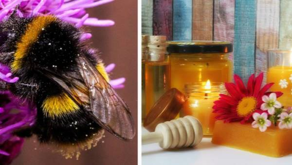 """Wosk pszczeli w pielęgnacji ciała – poznaj niezwykłe właściwości """"złota pszczół""""!"""