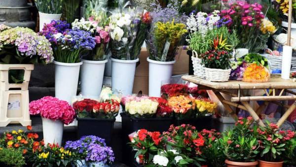 Energia z kwiatów – zobacz, które bukiety oddają jej najwięcej