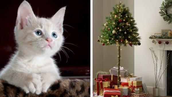 Choinka dla właścicieli kotów. Czy to drzewko sprawi, że twoje Święta będą spokojne?