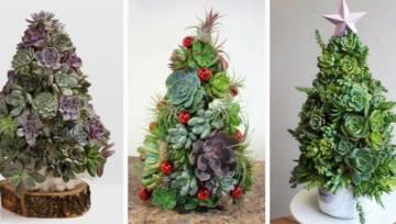 Żywa choinka z sukulentów – pomysł na niebanalną świąteczną ozdobę