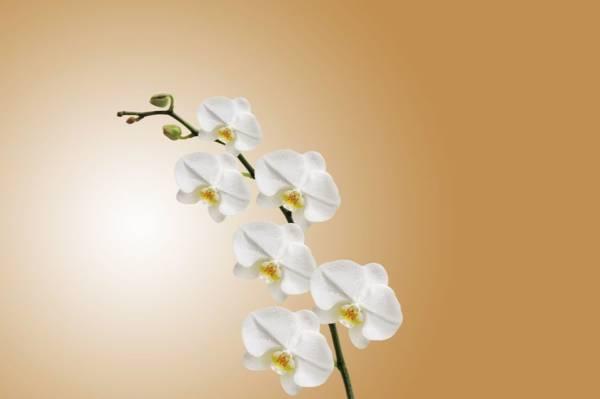 energia z kwiatów
