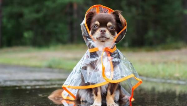 Ubrania dla psów – wady i zalety