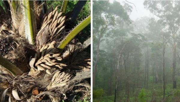 Olej palmowy – bojkot produktu może nie ocalić środowiska. Co zatem będzie najlepsze dla lasów deszczowych?