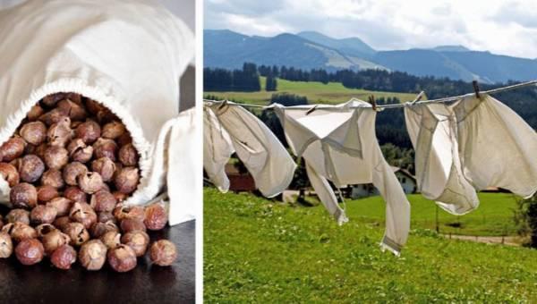 Orzechy piorące zamiast chemicznych proszków? Poznaj plusy i minusy ekologicznego prania!