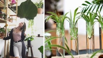 Plantporn – instagramowy trend, który najlepiej oddaje tęsknoty millenialsów?