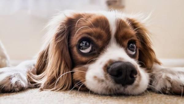 Najładniejsze imiona dla psów. Sprawdź, jak nazwać swojego nowego pupila!