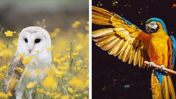 Jakim ptakiem jesteś? Poznaj swój znak w horoskopie Inków