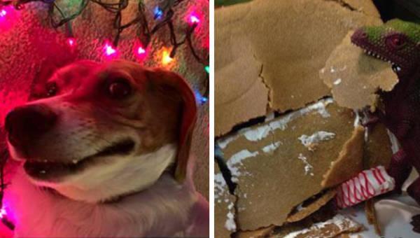 Zabawne świąteczne memy – błyskawiczny relaks po bożonarodzeniowej krzątaninie