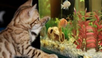 Akwarium w domu. Zobacz jak zaaranżować wnętrze, aby przenieść się w niezwykły podwodny świat