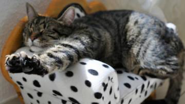 Najbardziej leniwe znaki zodiaku – sprawdź, kto lubi długo spać i zawsze wszystko odwleka!