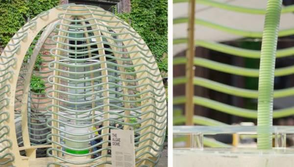 The Algae Dome – plantacja w centrum zatłoczonego miasta. Czy pawilony z algami to przyszłość?