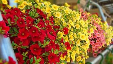 Marzec na balkonie – czas zasadzić kolorowe bratki! Ale nie tylko
