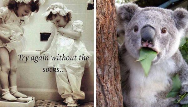 Najlepsze memy o dietach – oglądaj i chudnij od śmiechu!