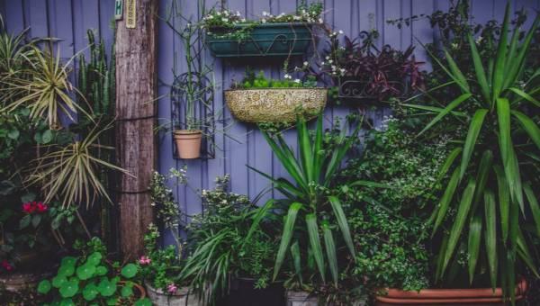 Schronisko dla roślin – piękna inicjatywa w służbie przyrodzie. Oddaj, albo adoptuj kwiatka!