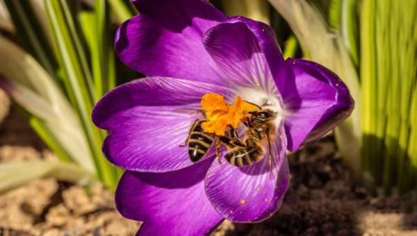 Przyjmij zapylające owady w swoim ogrodzie. Podpowiadamy, jakie rośliny zasadzić, aby przysłużyć się naturze
