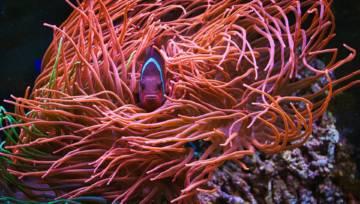 I Koralowe włosy – najgorętszy koloryzacyjny trend nadchodzącego lata!