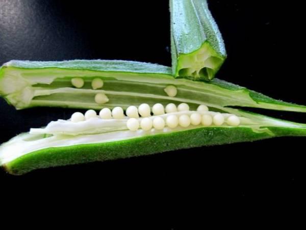okra wnętrze rośliny