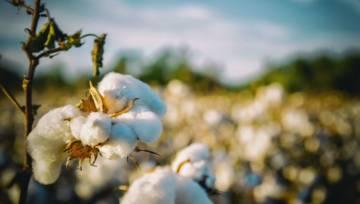 Podpaski i tampony organiczne są zdecydowanie bezpieczniejsze dla twych delikatnych sfer. Czym się różnią od tradycyjnych?