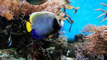 Ryby we wnętrzach – wraz z nadejściem ciepłych miesięcy marzy nam się morski klimat. Poznaj gorący wiosenno-letni trend!