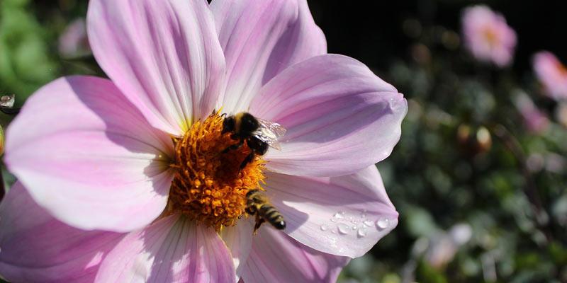 jak zrobić domek dla pszczół