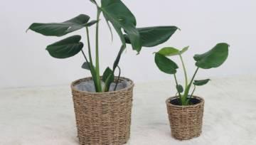 Przedstawiamy trendy doniczkowe, czyli najbardziej fotogeniczne rośliny tego sezonu