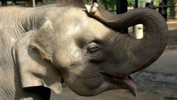 Niemiecki cyrk apeluje o zastąpienie zwierząt hologramami i organizuje pokazy z wirtualnym słoniem