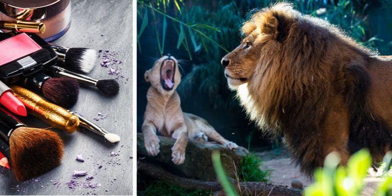 kosmetyki inspirowane królem lwem
