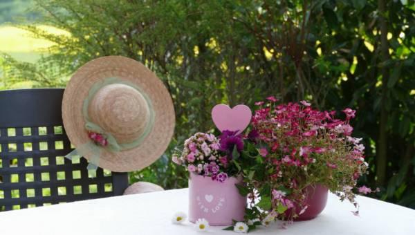Kwiaty na upały – którym roślinom nie przeszkadza spiekota i jak o nie dbać, gdy na zewnątrz panują tropikalne temperatury. 8 propozycji